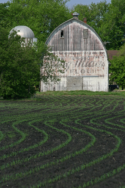 Barn with rows of corn