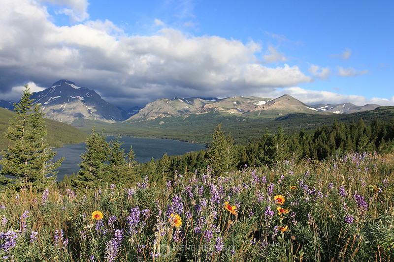 Two Medicine lake and wildflowers