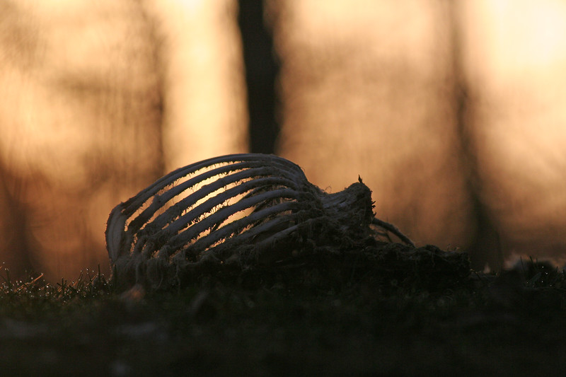 Poacher dawn, Turtle Lake WI