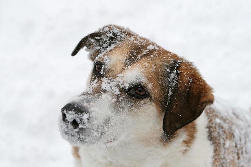 Snowy dog 1