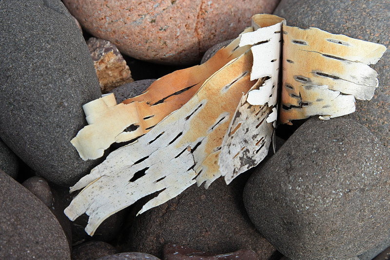 Birch bark washed up on shore