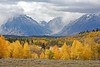 Teton fall colors
