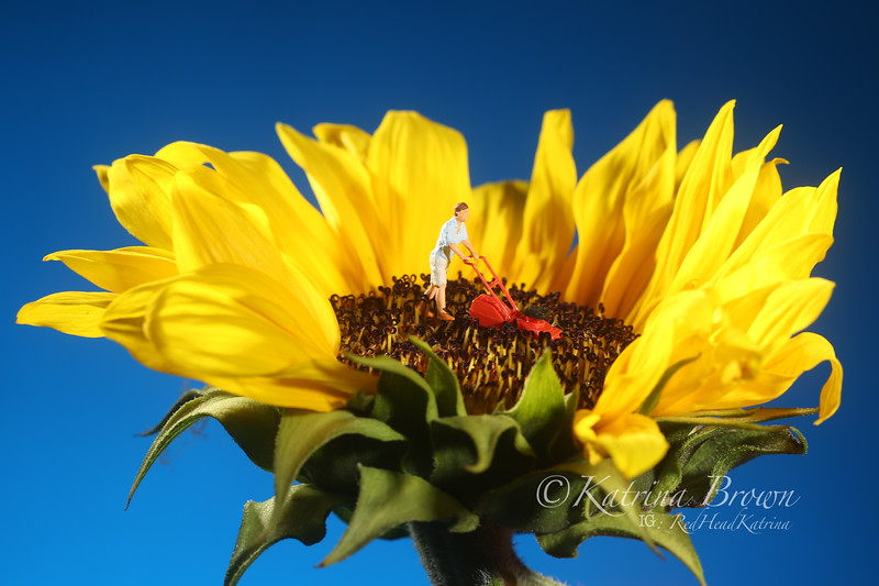 Plastic Person Mowing Grass on a Sunflower