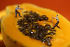 People Working on Papaya Fruit