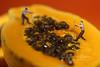 People Working on Papaya Fruit