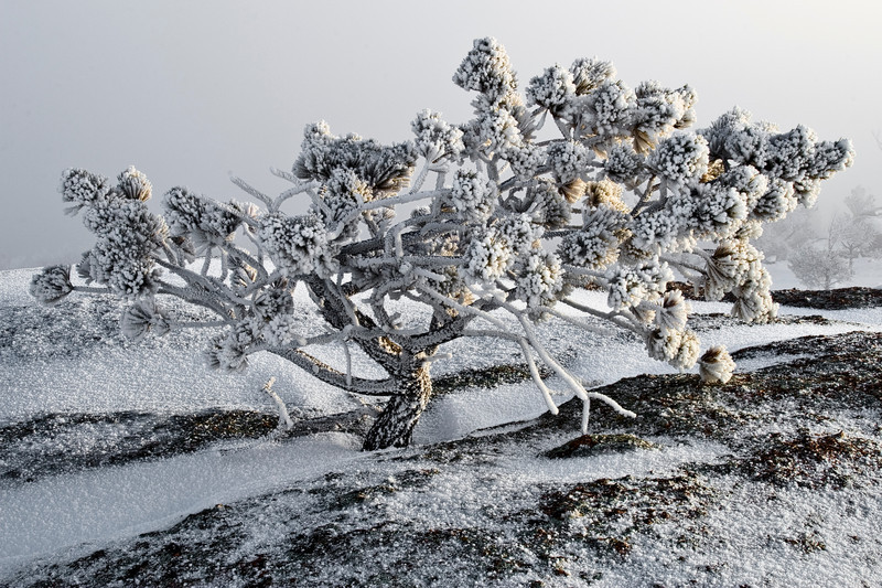 Gooseberry Bush, 2009<br /> ©Edward D Sherline