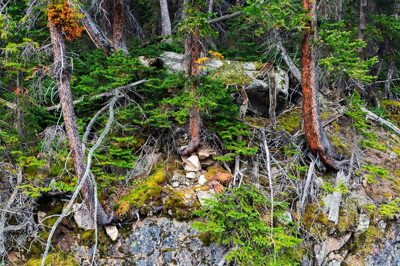 Three trees, Wind River Range, 2021 © Edward D Sherline
