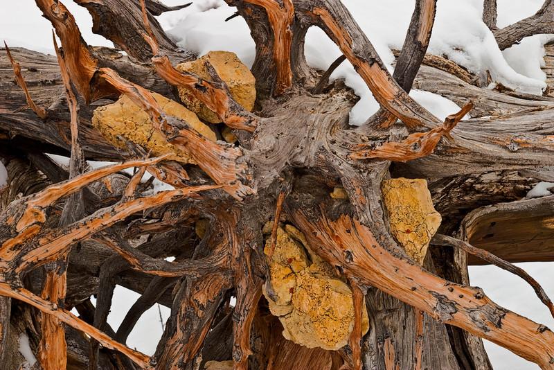 Tree Stump, 2009<br /> © Edward D Sherline