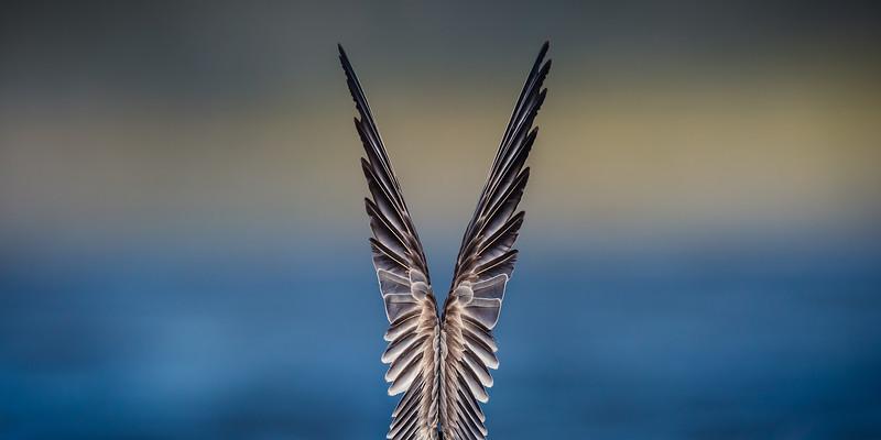 Wing Stretch-5732