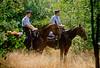 police sevices,politiediensten,services de police,horses,paarden,cheveaux