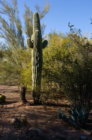 Desert Botanical Garden (Phoenix)