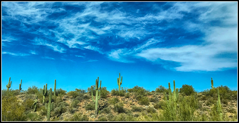 Saguaro cacti north of Phoenix
