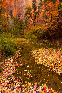 Autumn, West Fork Oak Creek