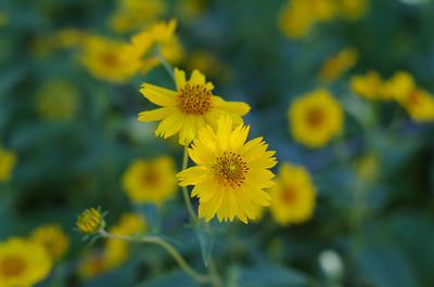Desert Flowers in Sedona