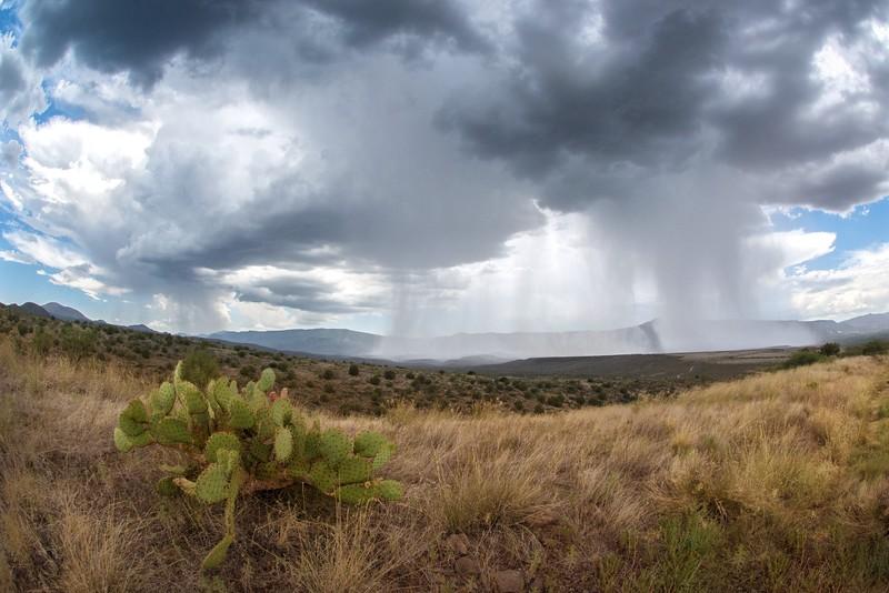 Desert Rainstorm