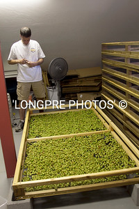 Marking drying tray 4 different  kinds of hops.