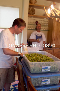 Ready for packaging.  All hops well dried over night in barn.