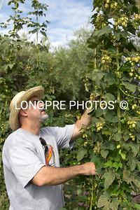 Full HOP vines.  Sedona Red Rock Hops