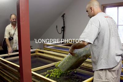 Dumping bins of hops into drying screens