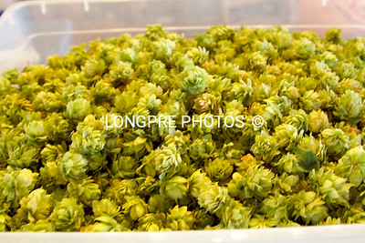 Hops...just picked.