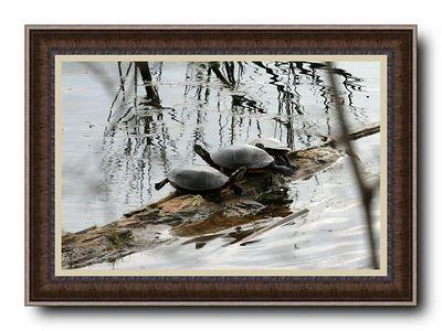 See Photos Framed