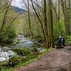 Quiet respite along the Little River Trail