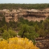 Evening shot of Cliff Palace with rabbitbrush in foreground.
