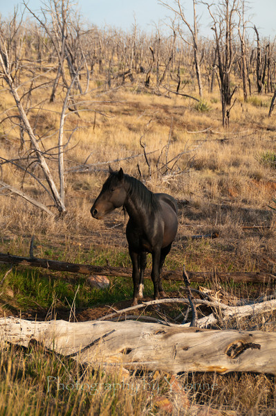 Feral horse at Mesa Verde. August 2012.