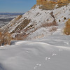 Tracks in snow at Mesa Verde NP.