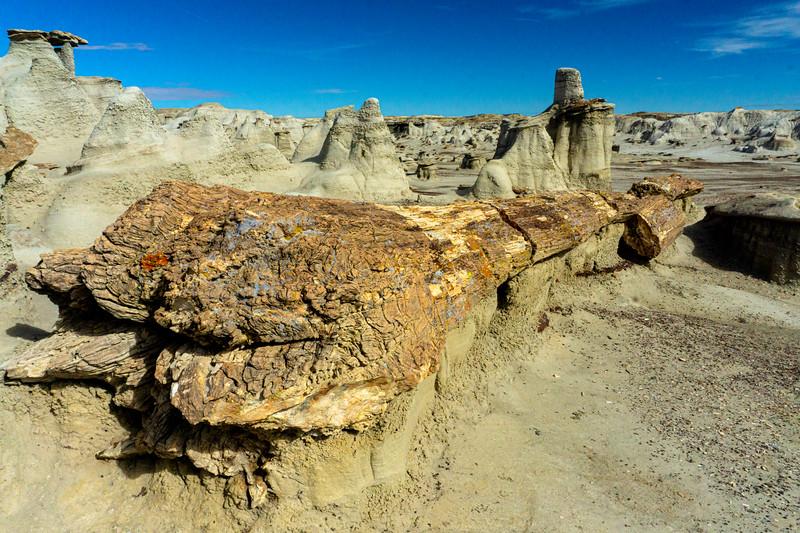 Bisti Badlands of New Mexico (8)