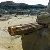 Bisti Badlands of New Mexico (6)
