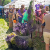 Grand Junction Lavendar festival