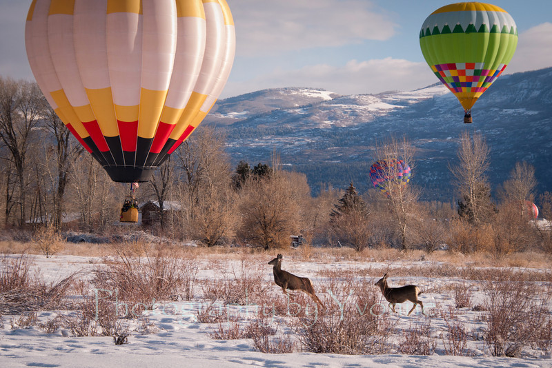 Mule deer scatter near the balloons in the Animas River valley.