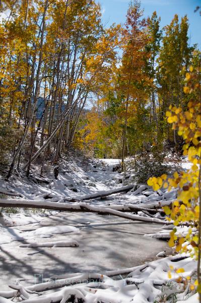 Aspen & frozen pond along Old Lime Creek Road. October 2011