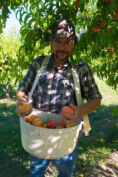 Palisade Peach Picker