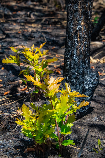New Life after 416 Fire