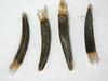 Eriophyllum lanatum (ERLA6)