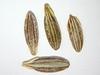 Lomatium nevadense (LONE)