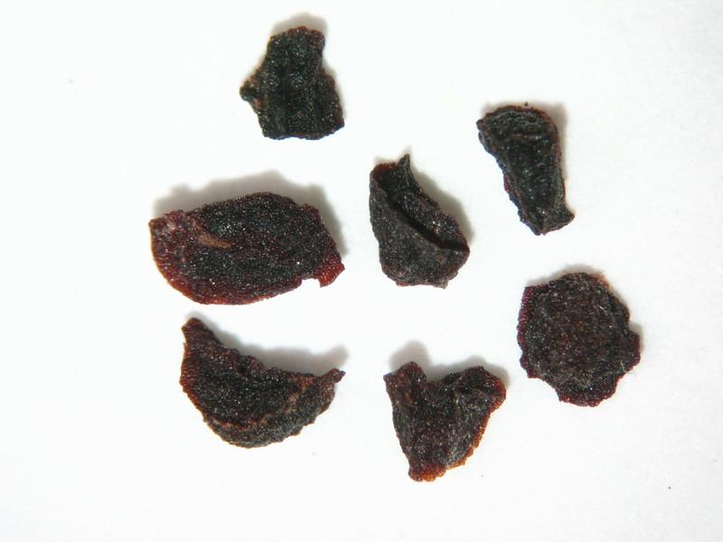 Penstemon fruticiformis (PEFR2)