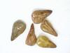 Cryptantha circumscissa (CRCI2)