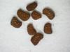 Nicotiana obtusifolia (NIOB)
