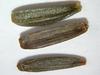 Balsamorhiza deltoidea (BADE2)