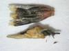 Ambrosia eriocentra (AMER)