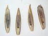 Festuca rubra (FERU2)