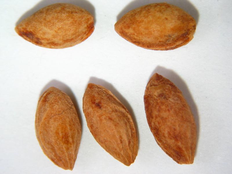 Prunus emarginata (PREM)