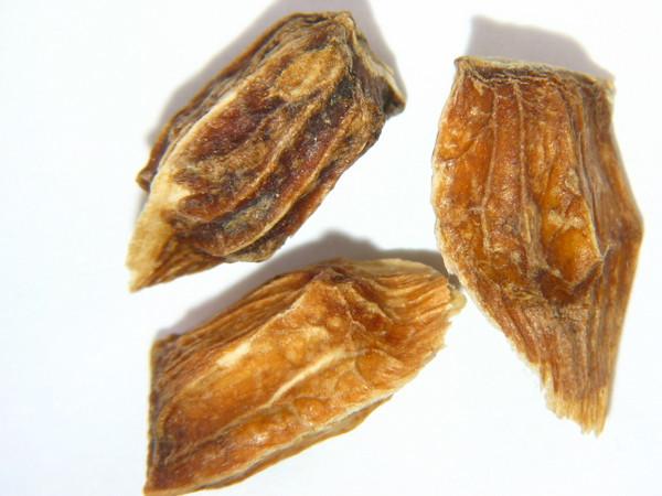 Acer circinatum (ACCI)