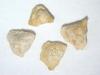 Atriplex confertifolia (ATCO)