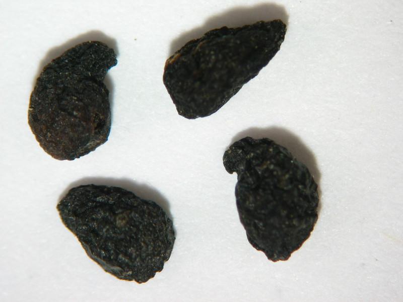 Chlorogalum pomeridianum (CHPO3)