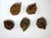 Cleome lutea (CLLU2)