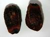 Cornus nuttallii (CONU4)